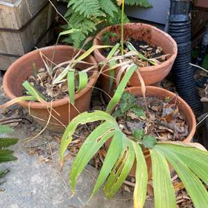 Lot # 71 - Three terra-cotta pots