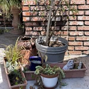 Lot # 192 - Planters, Pots and Plants