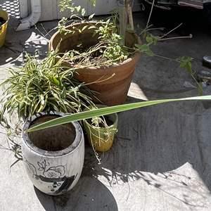 Lot # 198 - (4) Pots and Plants, (1) Terracotta (3) Ceramic
