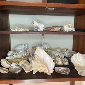 Lot # 76 - Collection of shells