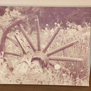 Lot # 102 - Canvas photo print