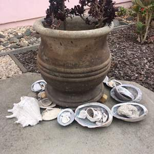 Lot # 60 - Large Cement Garden Pot and  Shells