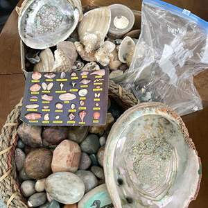 Lot # 65 - Rock and Shell Collection