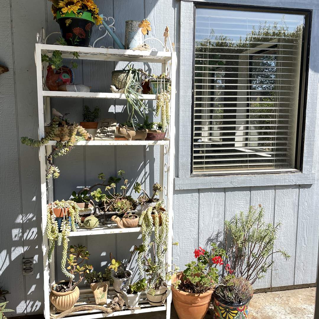 Lot # 155 - Gardener's Dream, Potted Plants and More (Rack Not Included) (main image)