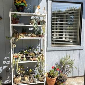 Lot # 155 - Gardener's Dream, Potted Plants and More (Rack Not Included)
