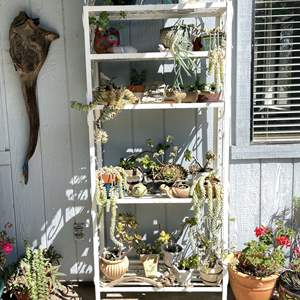 Lot # 156 - Large Gardening Rack/Display (Contents Not Included)