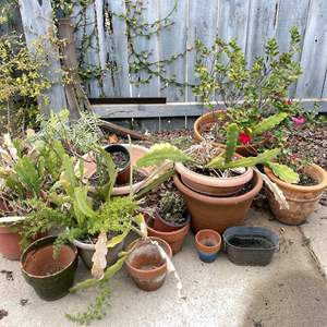 Lot # 161 - Terracotta Pots and Plants Collection