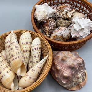 Lot # 160 - Shells
