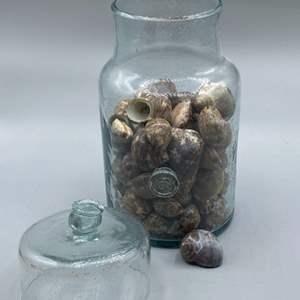 Lot # 162 - Shells