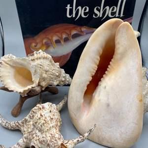 Lot # 163 - Shells