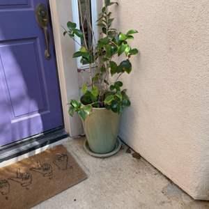 Lot # 101-Outdoor Plants!